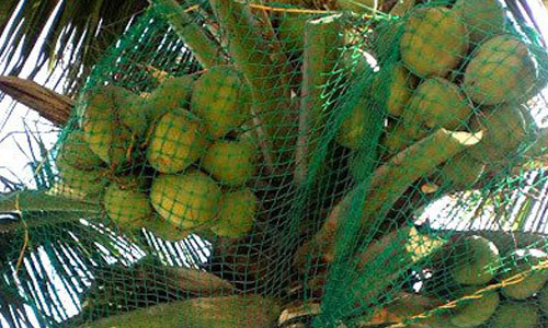 coconut safety nets in pune