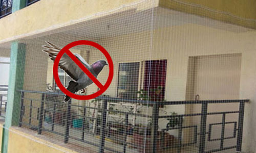 pigeon safety nets in pune